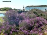 blühende Algarve