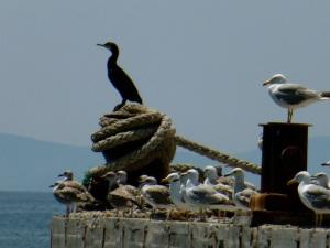 im Hafen von Nesebär