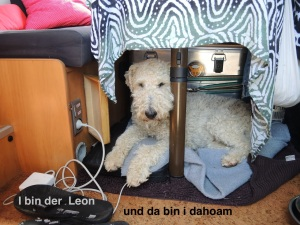 i bin da Leon